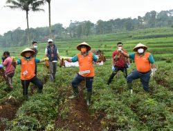 KUR Cluster Ubi Cilembu, Diharapkan Mensejahterakan Petani Sumedang